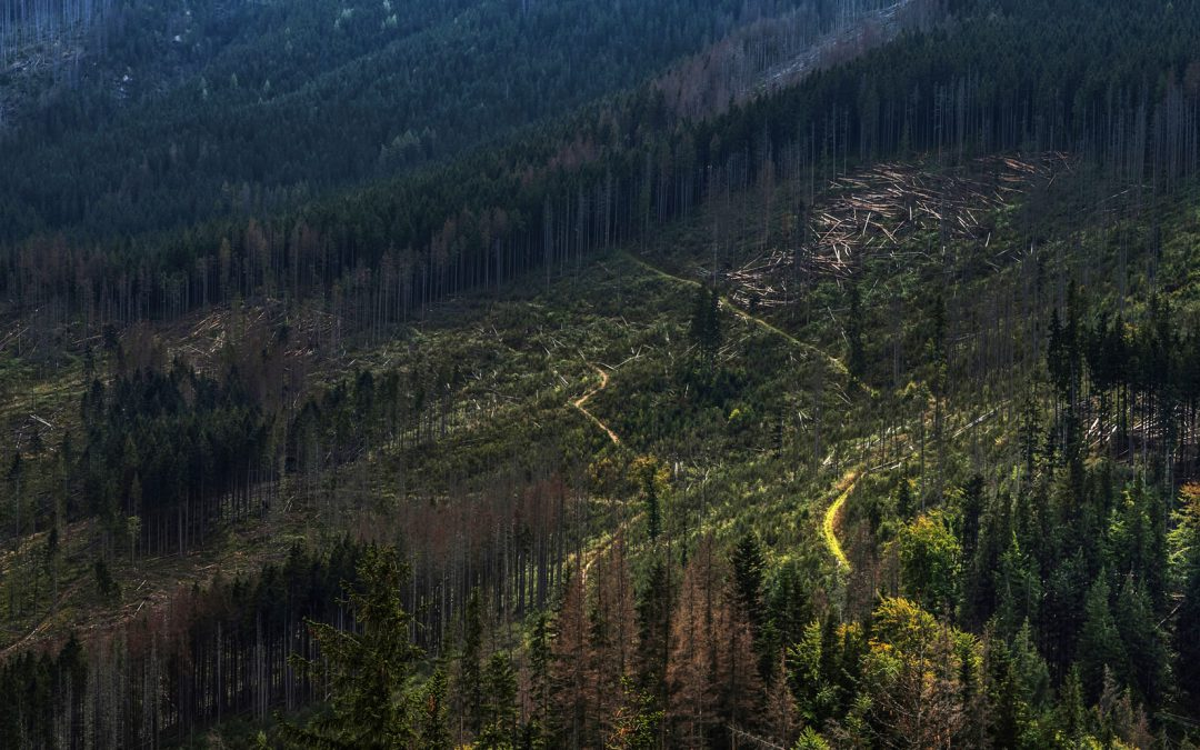 Deforestation: Our Disappearing Woodlands
